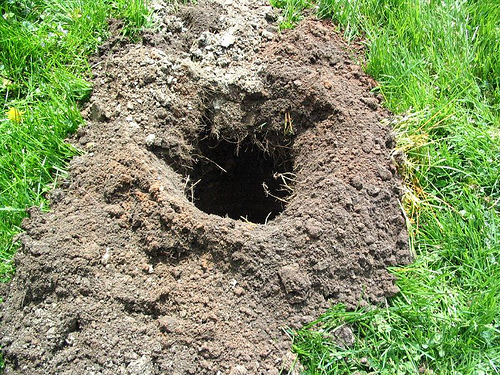 Animals Digging Holes in Yard http://www.thepostholewizard.com/
